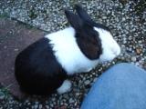 Mijn konijn! Flits
