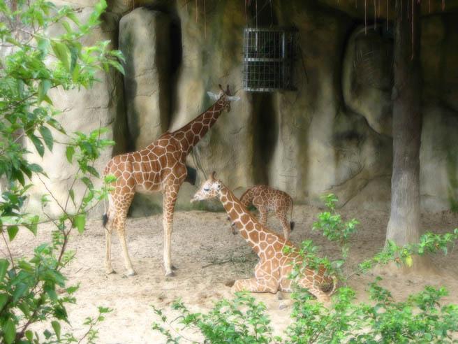 Uitje naar de Taipei Zoo, mooie foto ondanks het slechte weer. Lichte nabewerking is Photoshop.