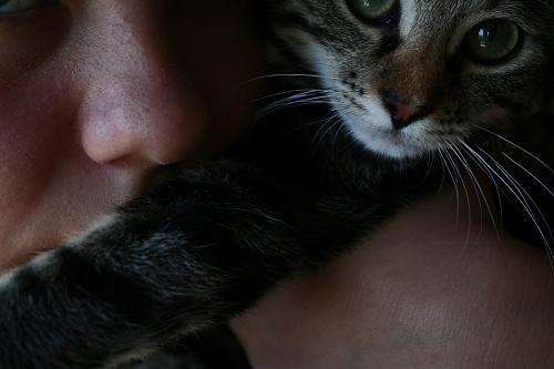 Mijn knuffelige adoptiepoes