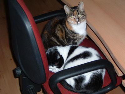 mijn twee lieve schatten van katten!