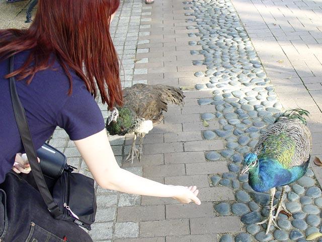 Ik met de pauw die mij beet.