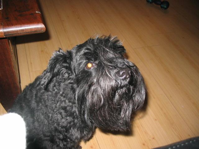 Mijn hond!