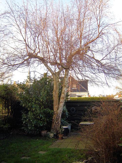 Nog een boom