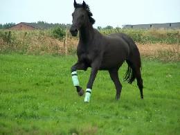 Mijn paardje Pompano