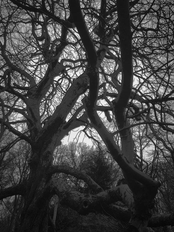 De grilligheid in een boom