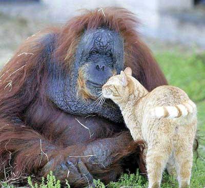 me moeder en de kat