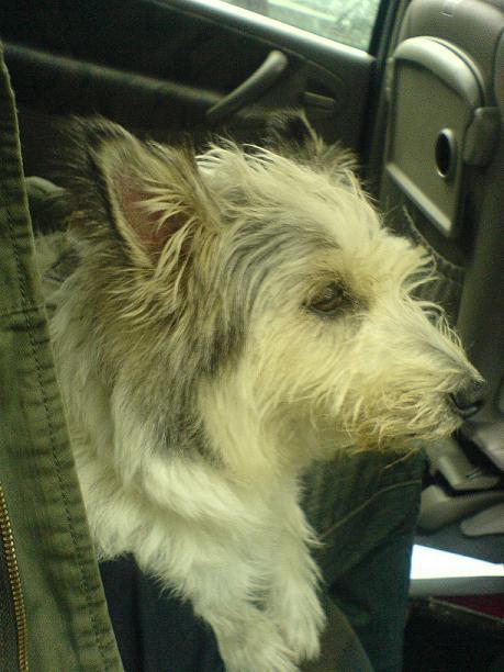 My doggiedawg.