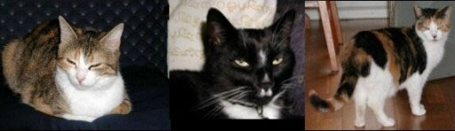 Mijn katten, Hermelientje, Jeroentje en Mielo