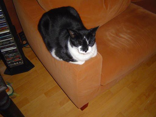 Kat nr.1 Odie