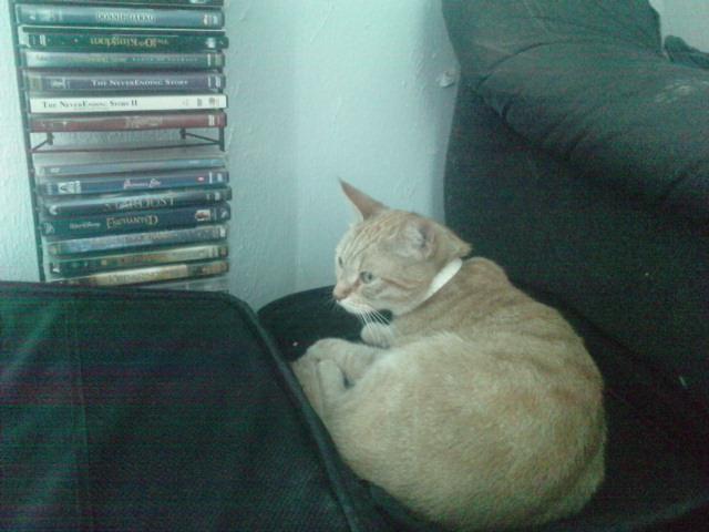 mijn kat Lola