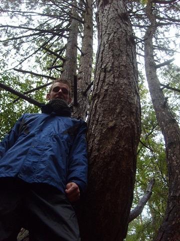 Soms regent het in het bos