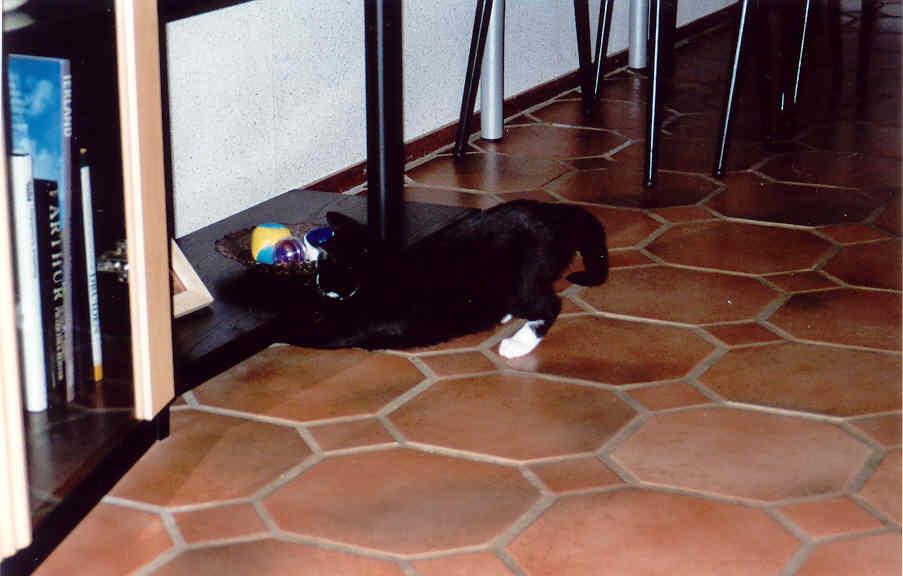 Nieuwe olympische katten-sport: Muis vissen.