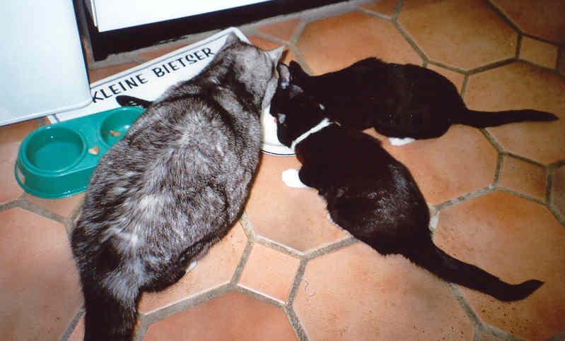 De kleine bietsers: Mickey, Bonny en Clyde