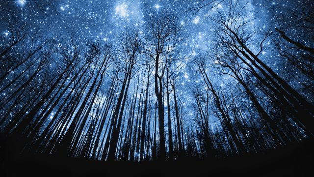 night sky forest