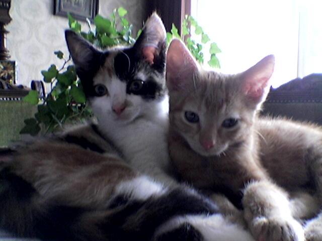 Mijn lieve nieuwe katjes Tom en Cato gezellig samen