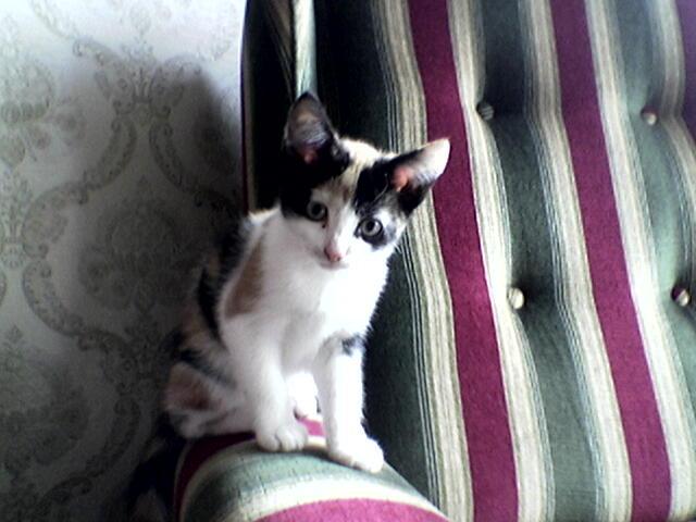 Mijn lieve nieuwe katje Cato