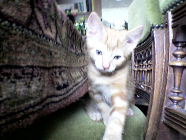 Mijn lieve nieuwe katje Tom