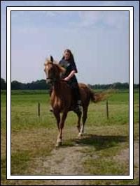 Llewella te paard