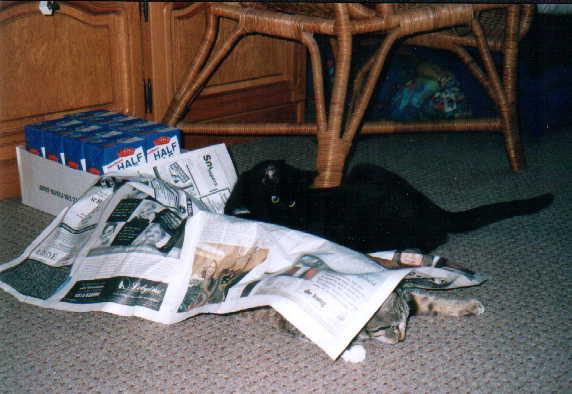 Katten [Lucky & Onyx