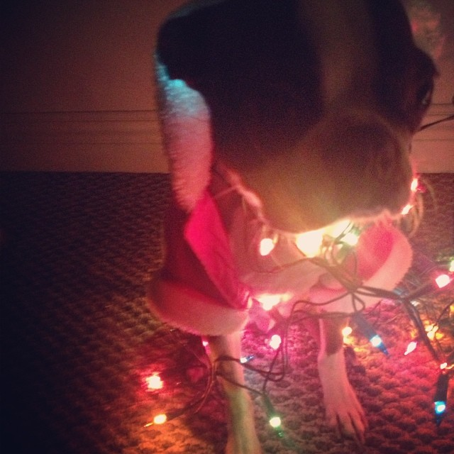 kerstman baby