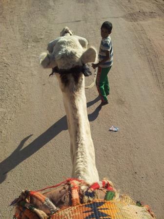 Uitzicht vanaf een kameel