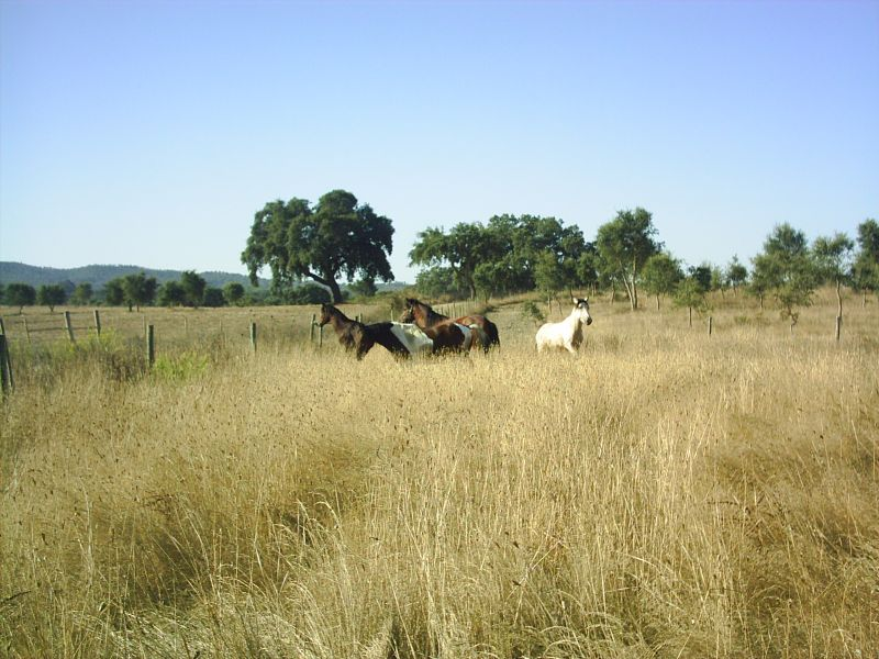 De ponies