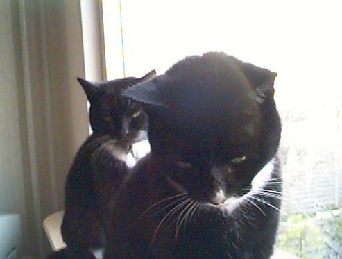 Kattenfile 2