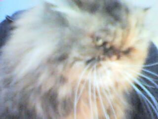 Onze goudgele kat Dido.....