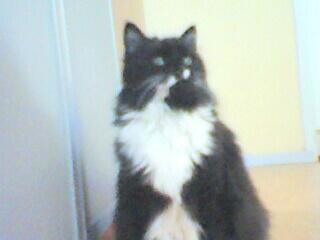 Onze zwarte kat Gaya.....