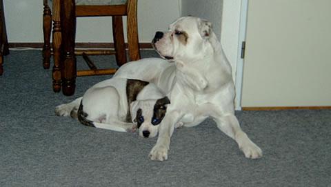doggies samen