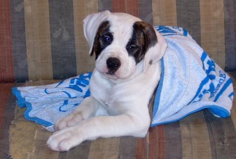 Jessie hier de kleinste dog