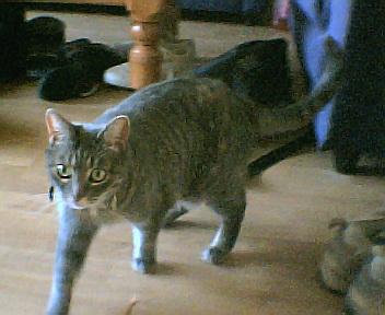 Onze kat: Micky