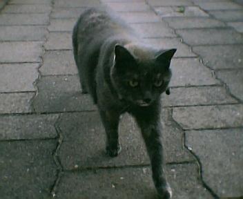 De kat : Desly