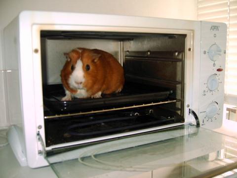 Cavia in de oven