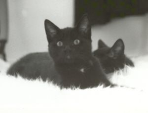 Lebbis (oude foto met kleinbeeldcamera)