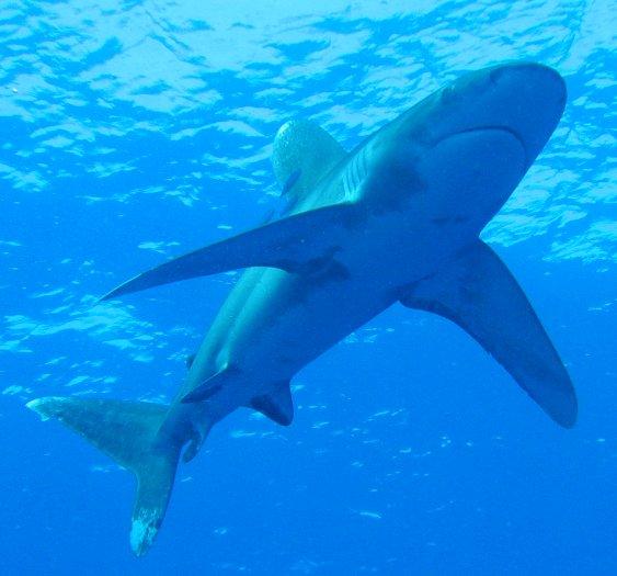 Gezellig samen duiken :)