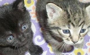 jonge katjes