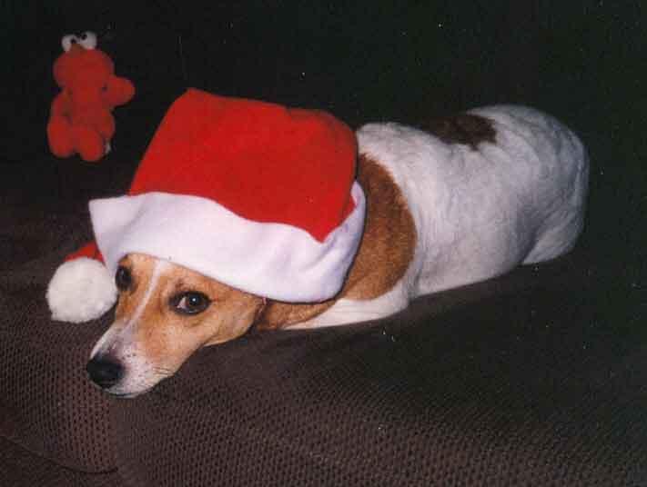 Santa Harley toch wel lekker warm