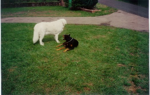 Bandor en zijn vriendje Shogun